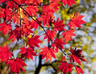 そろそろ訪れる紅葉シーズン
