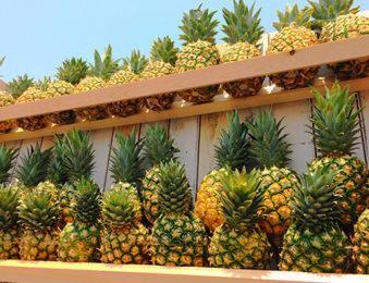 パイナップルの栄養素🍍
