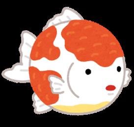 "<span class=""title"">【週刊ナガサキ】金魚に会いに行きました</span>"